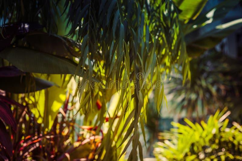 Groene struiken als natuurlijke achtergrond, groene bladeren met morn E royalty-vrije stock foto's