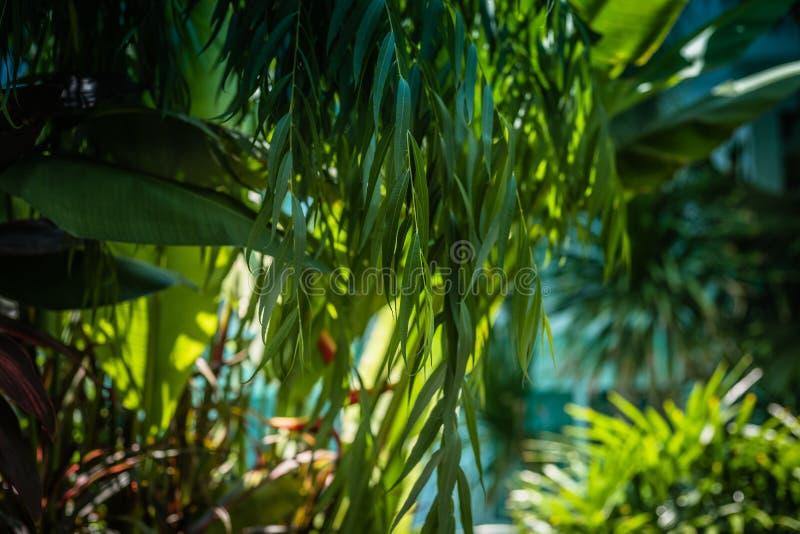 Groene struiken als natuurlijke achtergrond, groene bladeren met morn E royalty-vrije stock afbeeldingen