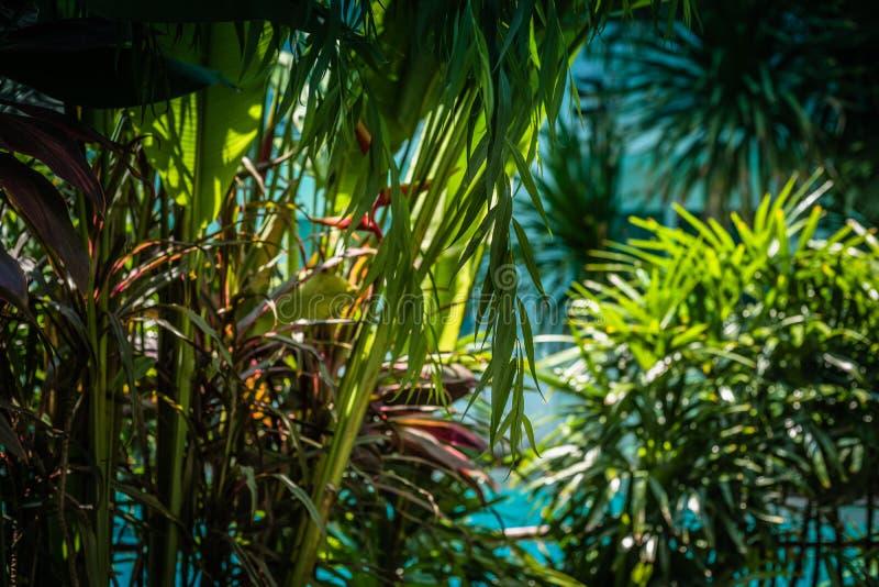 Groene struiken als natuurlijke achtergrond, groene bladeren met morn E stock afbeeldingen