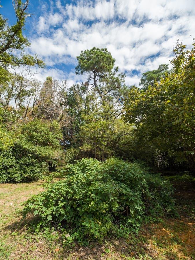 Groene struiken en bomen op de achtergrond van de zonnige blauwe hemel royalty-vrije stock foto's