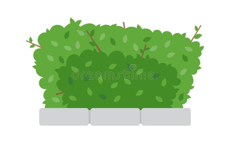 Groene struikomheining op witte achtergrond royalty-vrije illustratie