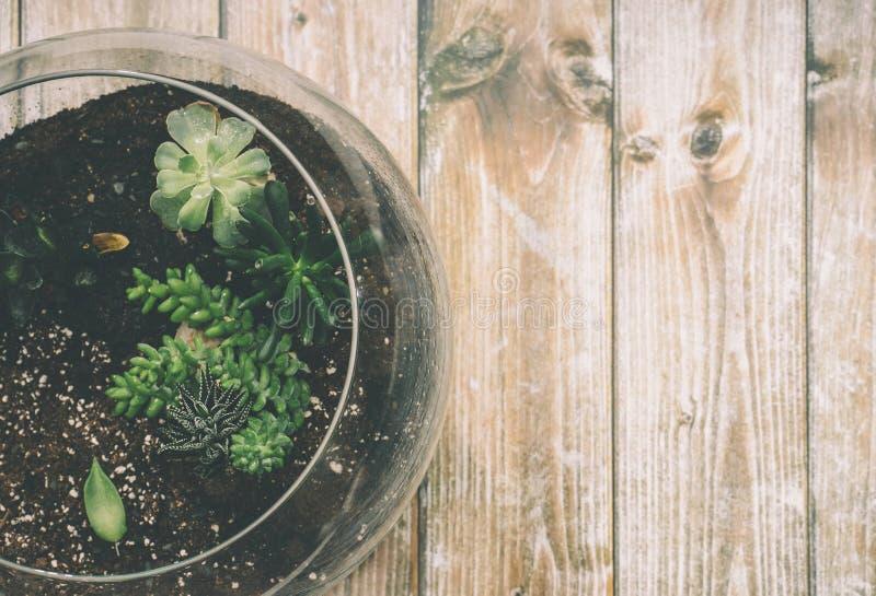 Groene Succulente Installatie op Duidelijke Glaskruik bovenop Bruine Houten Oppervlakte royalty-vrije stock afbeelding