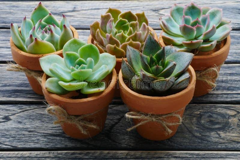 Groene succulente installatie in potten op houten achtergrond royalty-vrije stock foto's