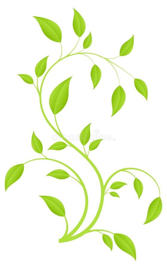 Groene tak vector illustratie