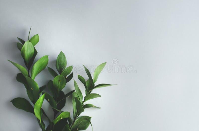 Groene takjes met bladeren op een grijze achtergrond stock afbeelding
