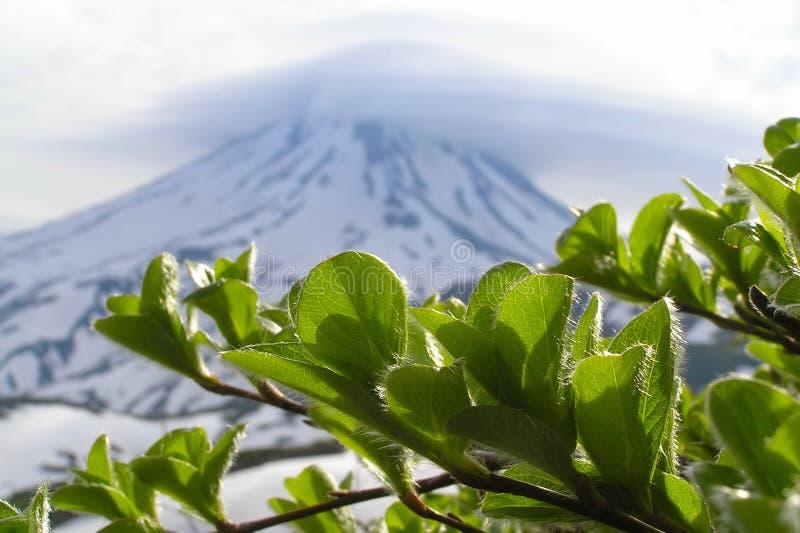 Groene takken en vulkaan   royalty-vrije stock afbeeldingen