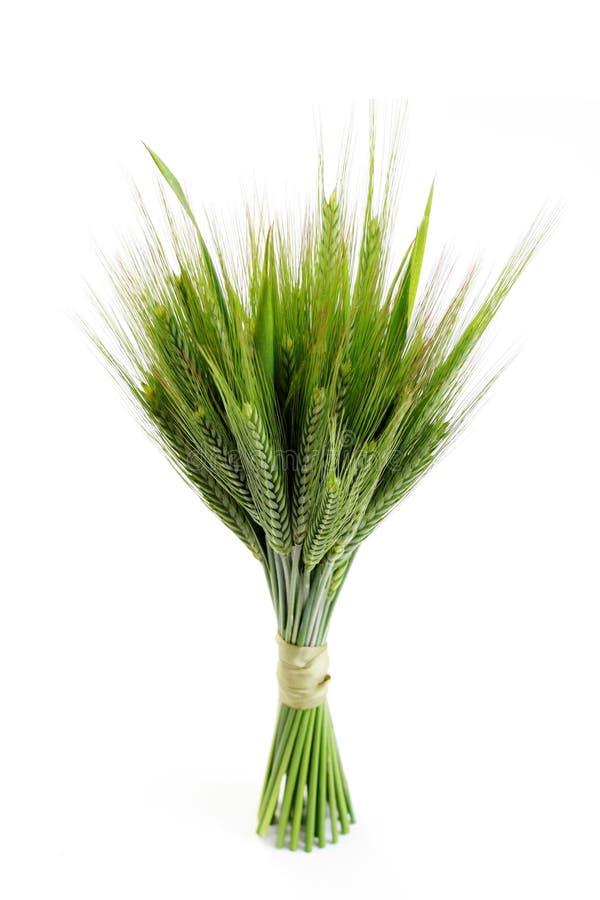 Groene tarwe stock foto's