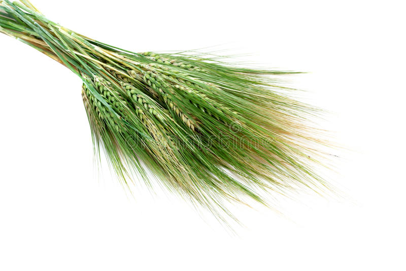 Groene tarweoren die op witte achtergrond worden geïsoleerdi stock foto's