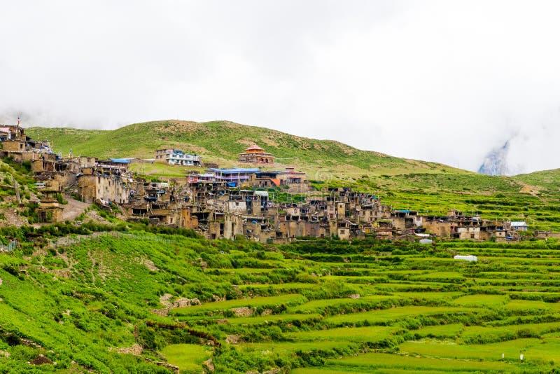Groene terrasvormige gebieden en traditionele architectuur in Nar dorp, Annapurna-Behoudsgebied, Nepal stock afbeelding
