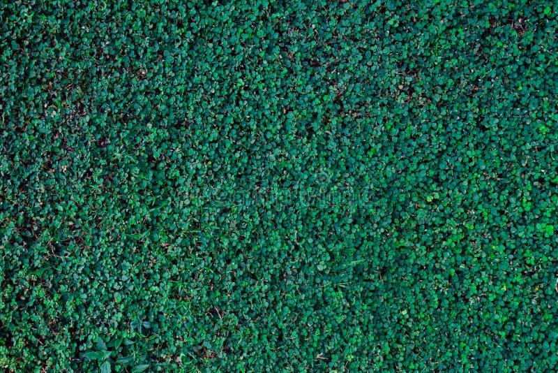 Groene textuur als achtergrond, de boom van het aardblad royalty-vrije stock foto's