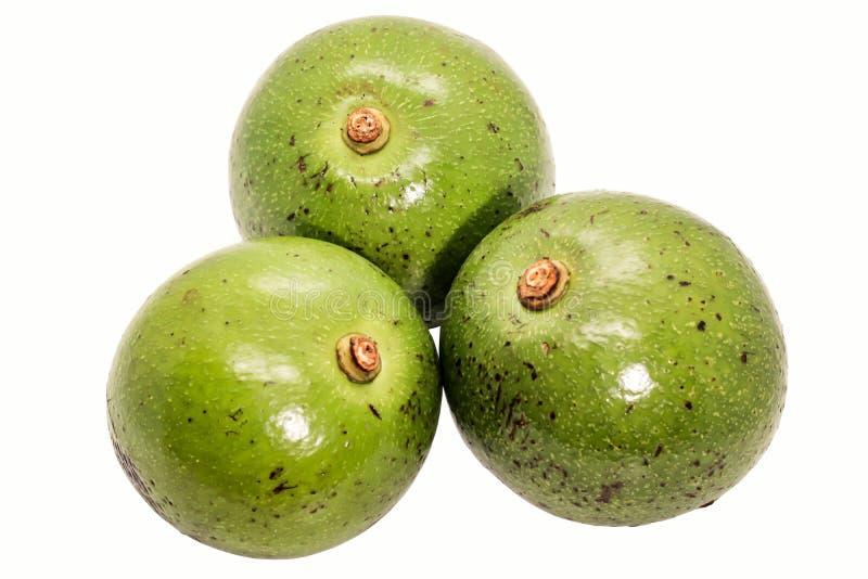 Groene Thaise avocado drie op witte achtergrond stock foto