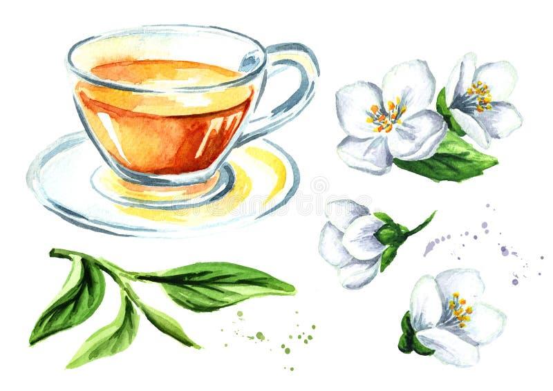 Groene thee met geplaatste jasmijnbloemen Waterverfhand getrokken die illustratie, op witte achtergrond wordt geïsoleerd royalty-vrije illustratie