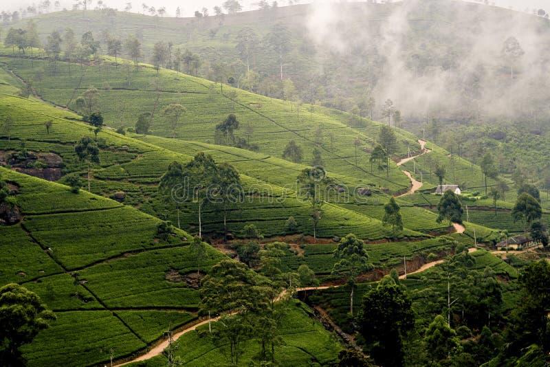 Groene thee terrasses in het hoogland van Sri Lanka royalty-vrije stock foto's