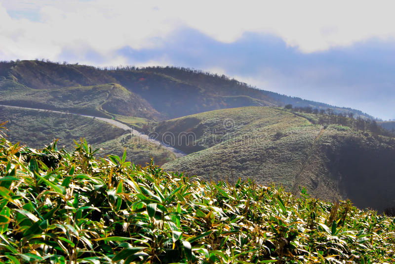 Groene theeaanplanting royalty-vrije stock foto