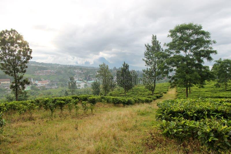 Groene theeaanplanting en de lokale stad - Puncak, Indonesië in B royalty-vrije stock foto