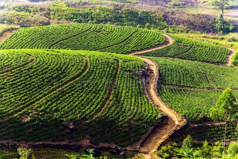 Groene Theeaanplanting op de heuvel, Ceylon, Sri Lanka royalty-vrije stock afbeeldingen