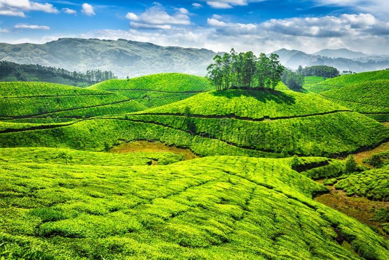 Groene theeaanplantingen in India stock foto