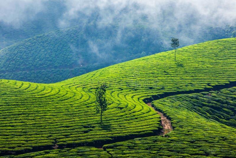 Groene theeaanplantingen in Munnar, Kerala, India royalty-vrije stock foto