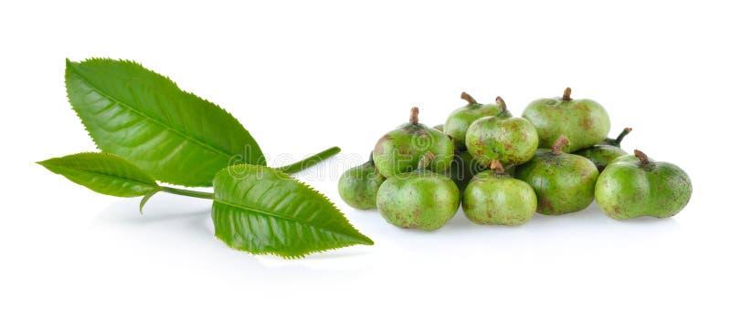 Groene theeblad en thee geïsoleerde zaden stock afbeelding