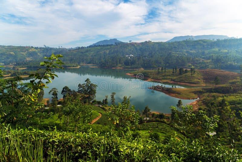 Groene theebladen Ceylon, Sri Lanka-struiken royalty-vrije stock foto's