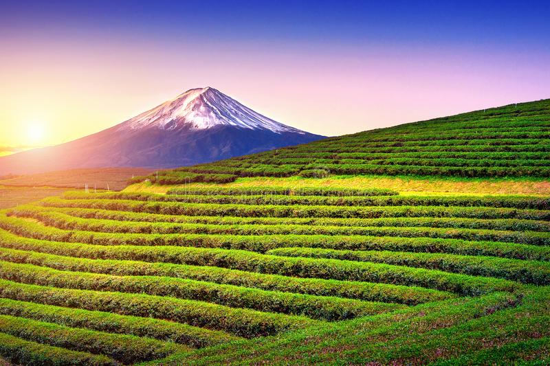 Groene theegebieden en Fuji-berg in Japan stock fotografie