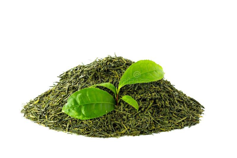 Groene theesencha op witte achtergrond royalty-vrije stock fotografie