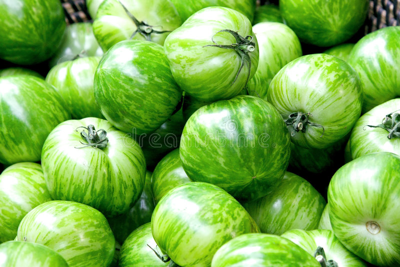Groene tomaat stock foto