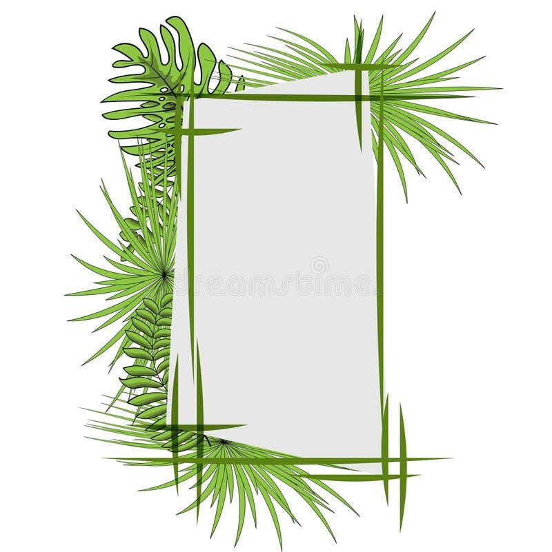 Groene tropische bladeren met kader Vector illustratie Eps 10 vector illustratie