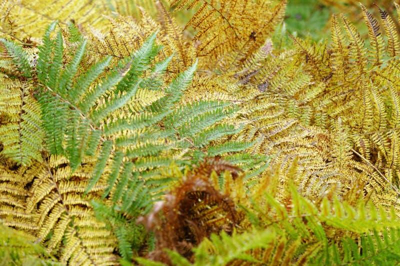 Groene tropische bladeren Monstera, palm, varen en sierplantenachtergrond stock foto's