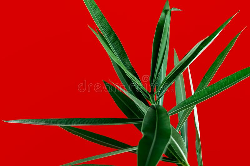 Groene tropische planten sluiten dicht op een rode achtergrond Creatieve natuurfotografie met hoog contrast Abstract royalty-vrije stock foto