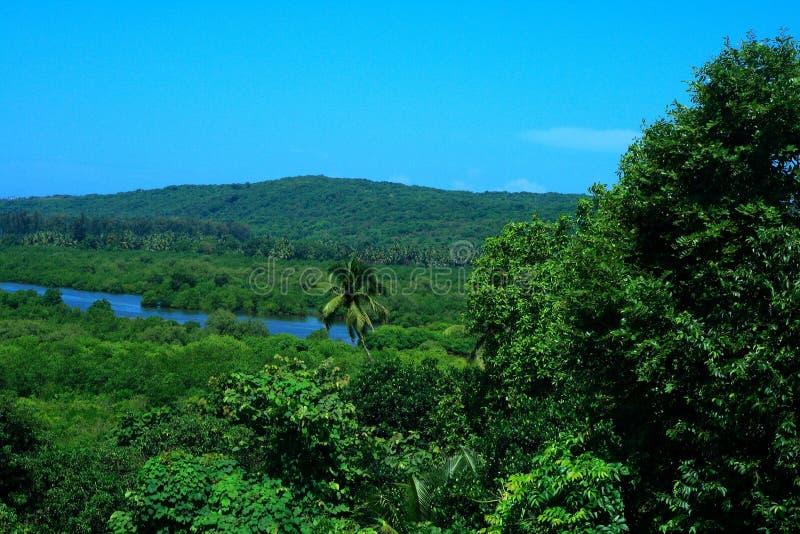 Groene tropische wildernis royalty-vrije stock foto's
