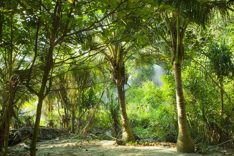 Groene tropische wildernis Planten de bosKokospalmen van Paradise en een andere royalty-vrije stock afbeelding
