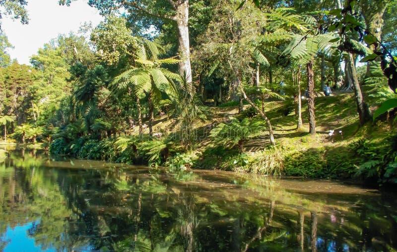 Groene tuin met stroom op Sao Miguel Island royalty-vrije stock afbeeldingen