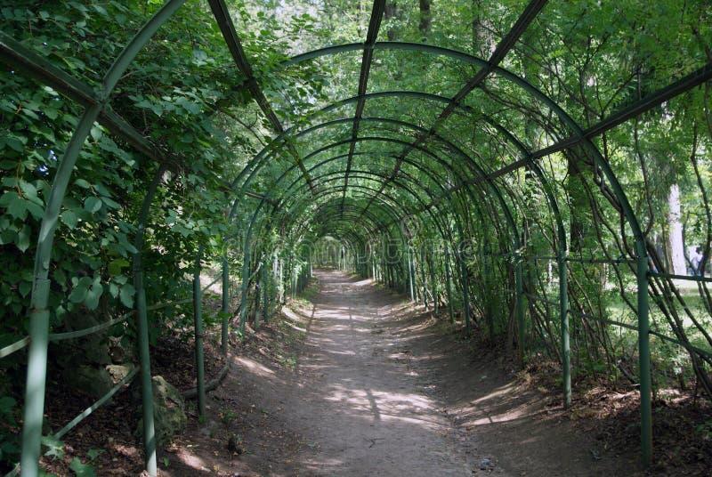 Groene tunnel stock foto's