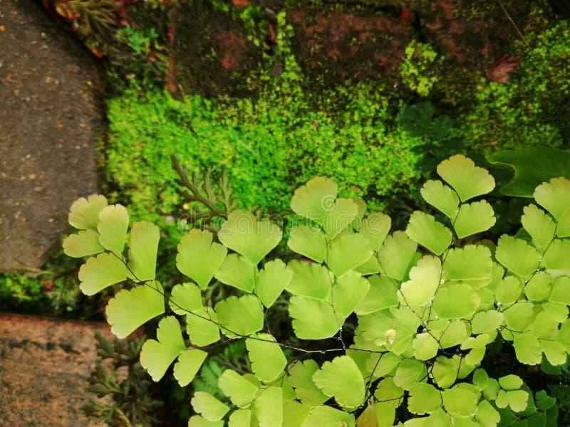 Groene varenbladeren royalty-vrije stock afbeelding