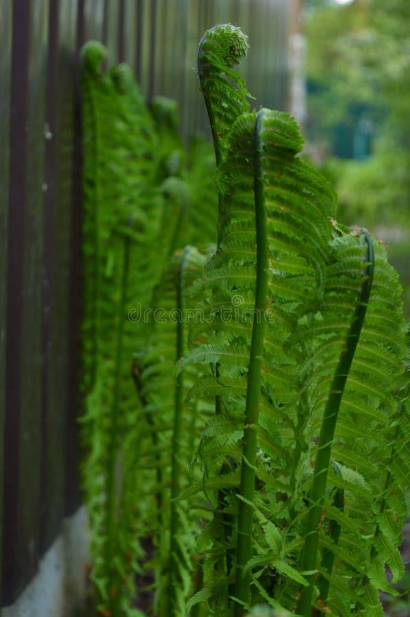 Groene varenbladeren onder de zon royalty-vrije stock fotografie
