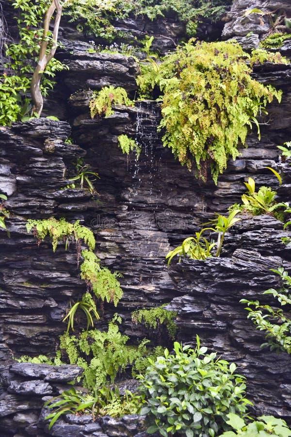 Groene varens op Zwarte schalie met waterval royalty-vrije stock afbeelding