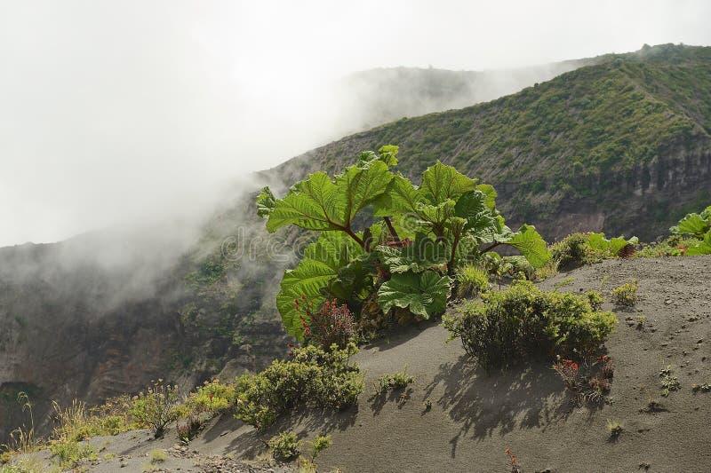 Groene vegetatie aan de kant van de Irazu-vulkaankrater in de Cordillera Centraal dicht bij de stad van Cartago, Costa Rica royalty-vrije stock fotografie