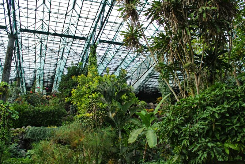 Groene vegetatie in een botanische tuin stock afbeelding