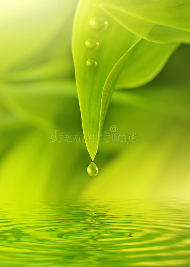 Groene verse bladeren stock foto's