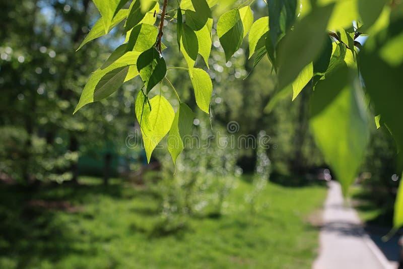 Download Groene Verse Bladeren Van Bomen Op Duidelijke Blauwe Hemel Stock Afbeelding - Afbeelding bestaande uit bosje, plantkunde: 107706631