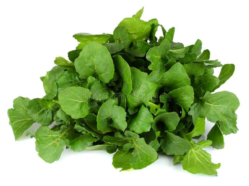 Groene verse die rucolabladeren op witte achtergrond worden geïsoleerd Raketsalade of arugula royalty-vrije stock fotografie