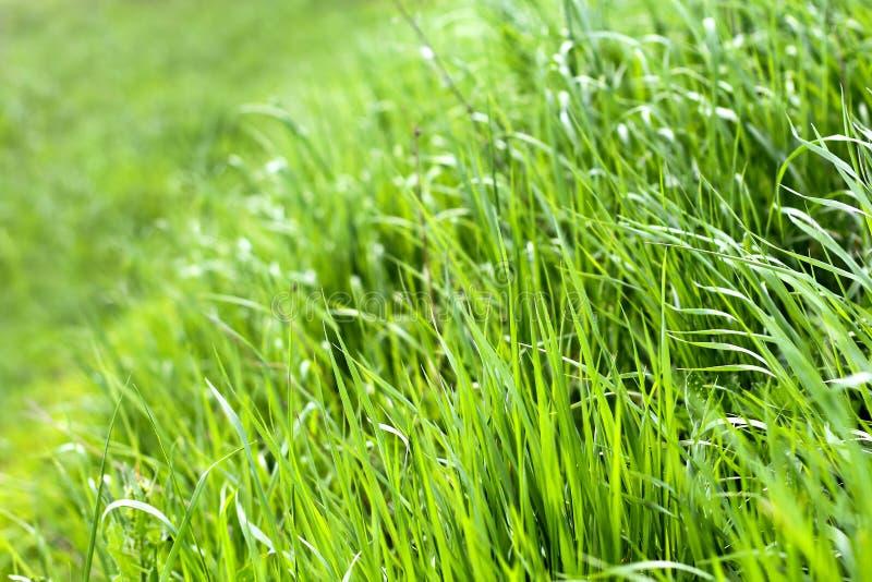 Groene verse grasachtergrond stock afbeeldingen
