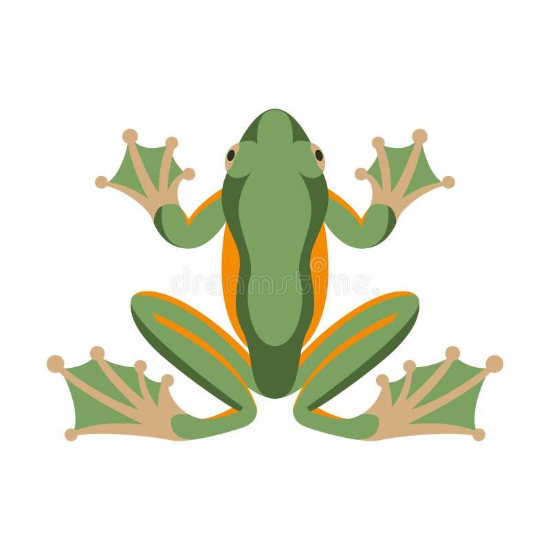 Groene vlakke de stijlvoorzijde van de kikker vectorillustratie stock illustratie