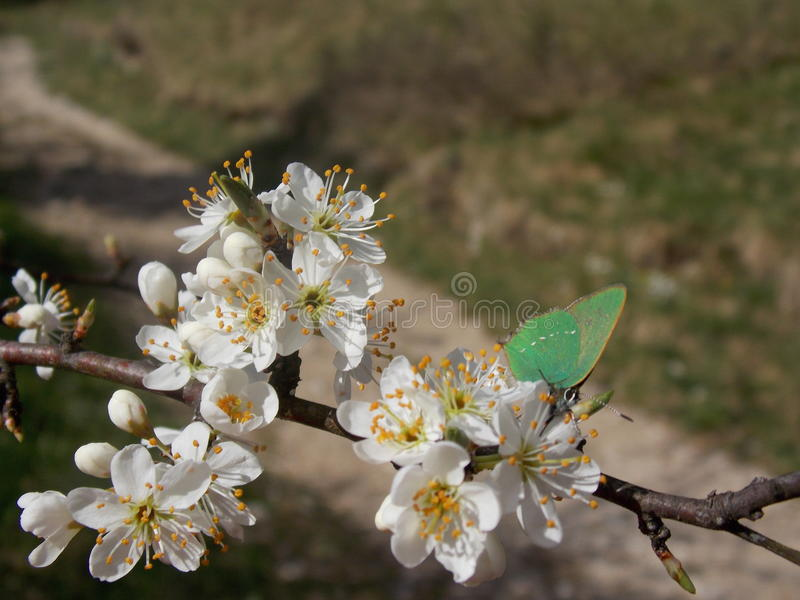 Groene vlinder royalty-vrije stock fotografie