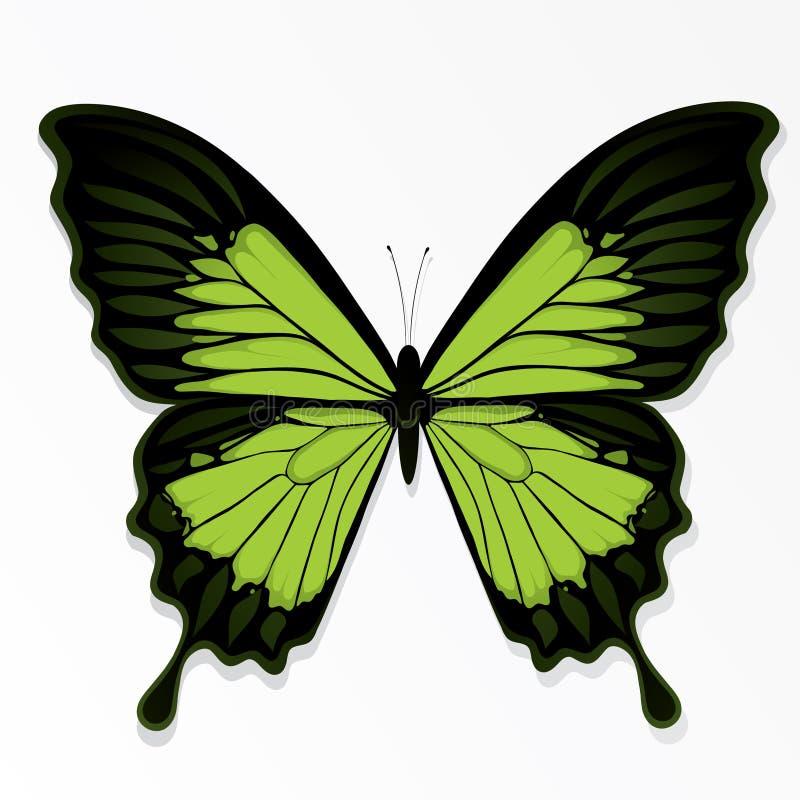 Groene vlinderillustratie stock illustratie
