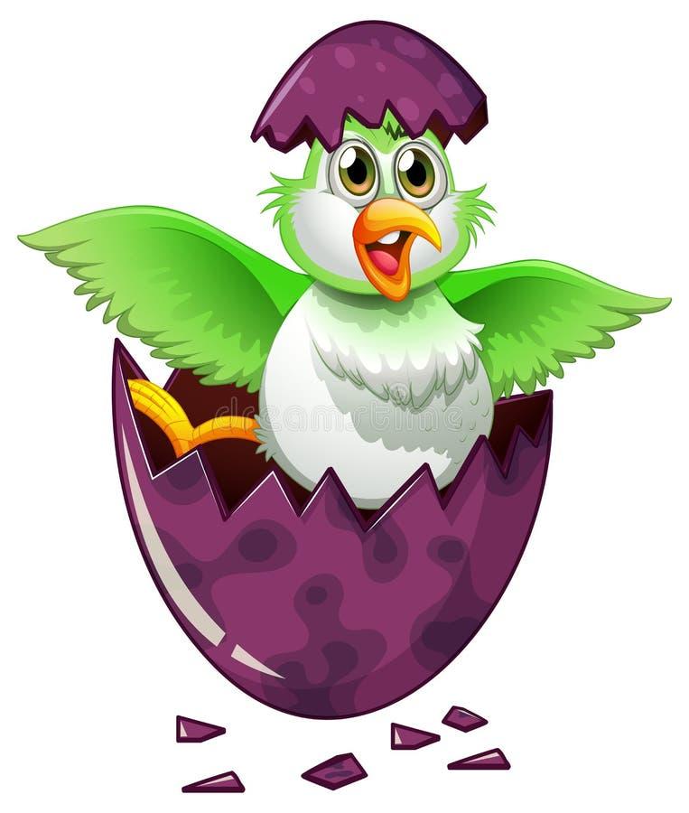 Groene vogel in purper ei stock illustratie