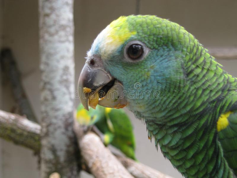Groene vogels stock foto's