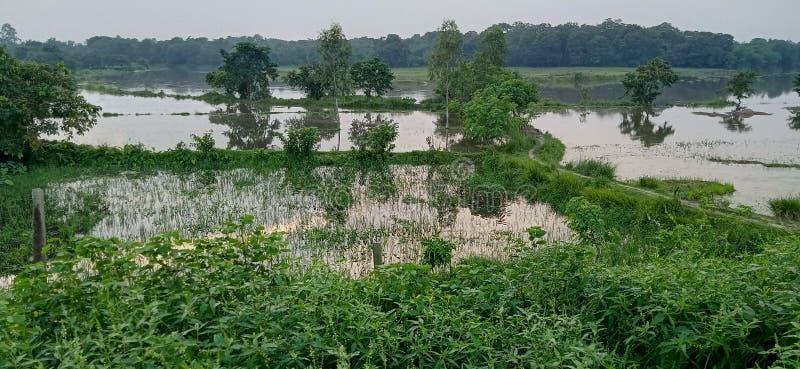 Groene water gevulde overstroomde landschapsbomen stock afbeelding