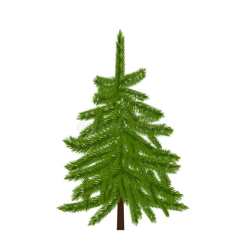 Groene weelderige sparren, pijnboom of spar Spartakken op witte illustratie royalty-vrije illustratie